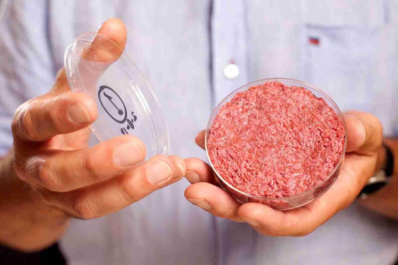 carne coltivata carne sintetica questionario